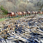 Trevi, la risorsa boschiva nei Monti Simbruini, 2002
