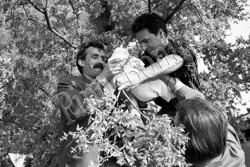 Rito della passata arborea a Noci (BA), 1992