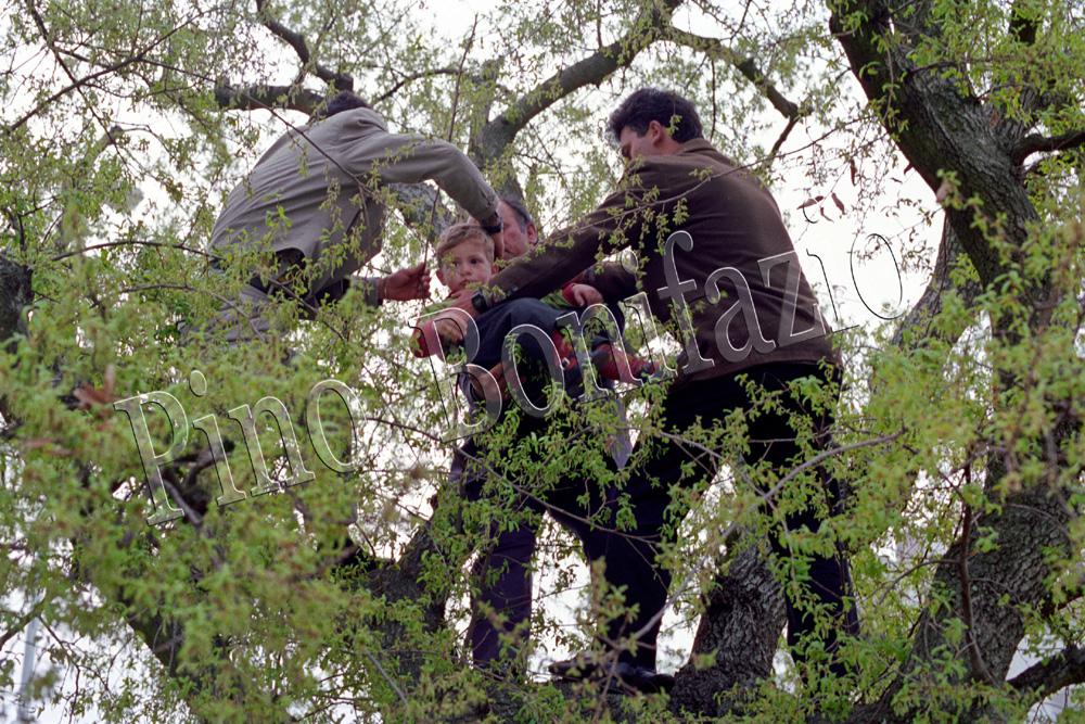 Rito della passata arborea a Noci (BA), 1993