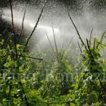 Irrigazione a pioggia in un campo di fagioli
